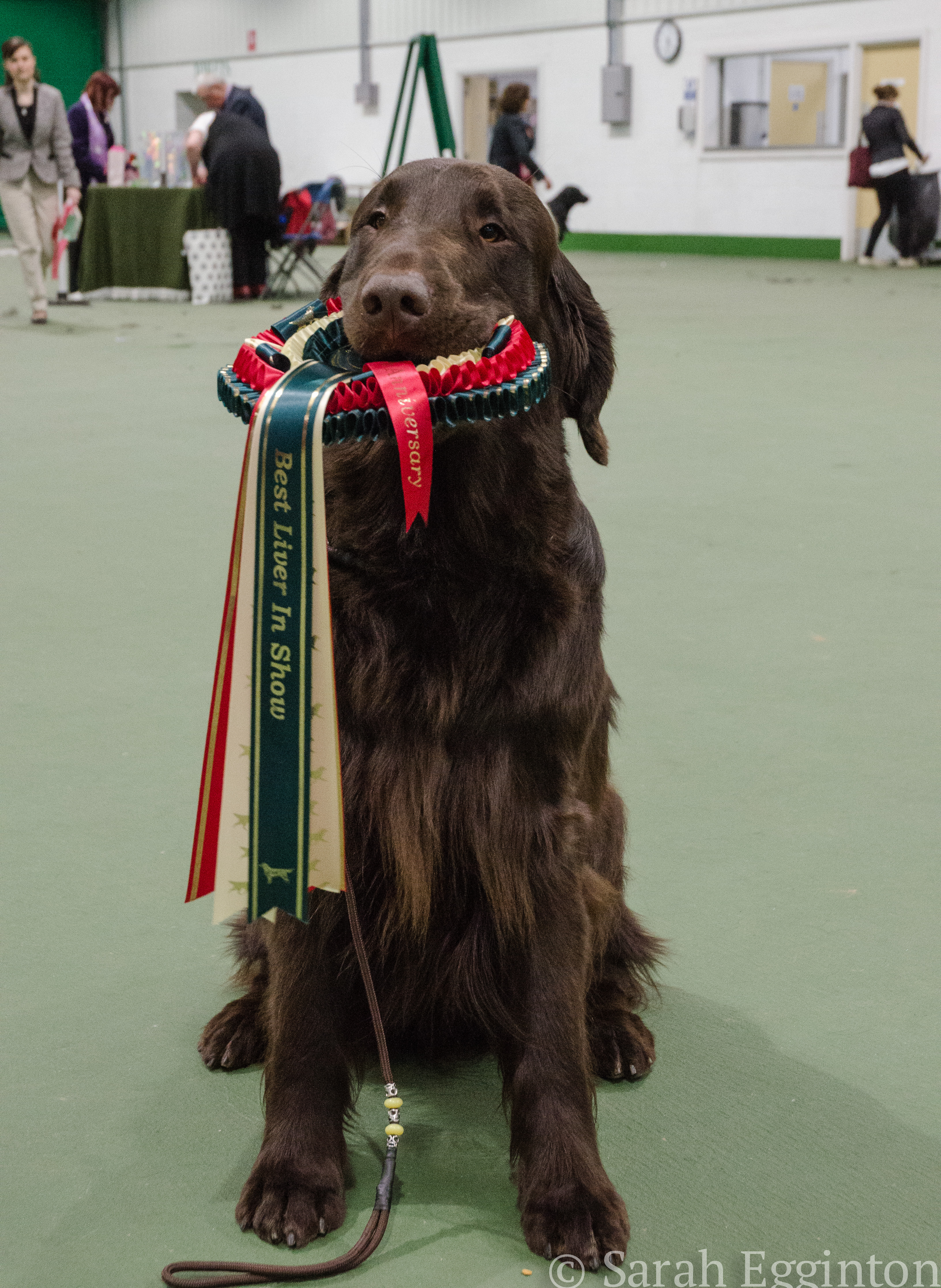 Breed show 62