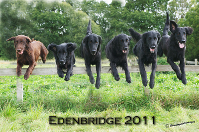 Edenbridge dogs